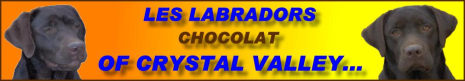 Les Labradors chocolat of Crystal Valley